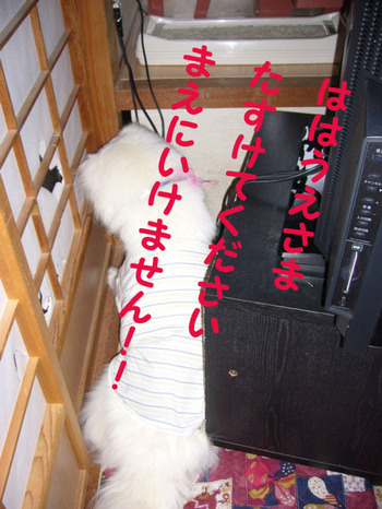 P1020525